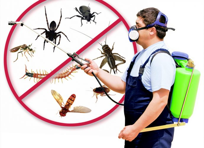 Prevent Damage From Birds With Proper Bird Control Sydney Services