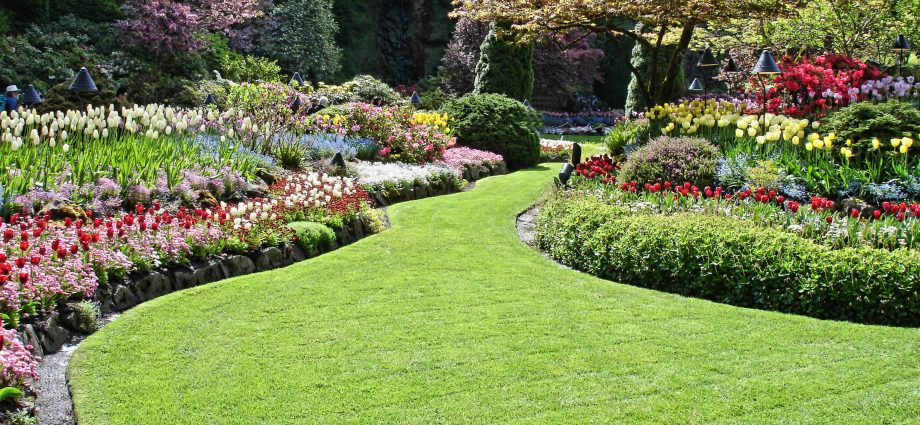Turf Suppliers - Choosing The Best Turf For Your Lawn